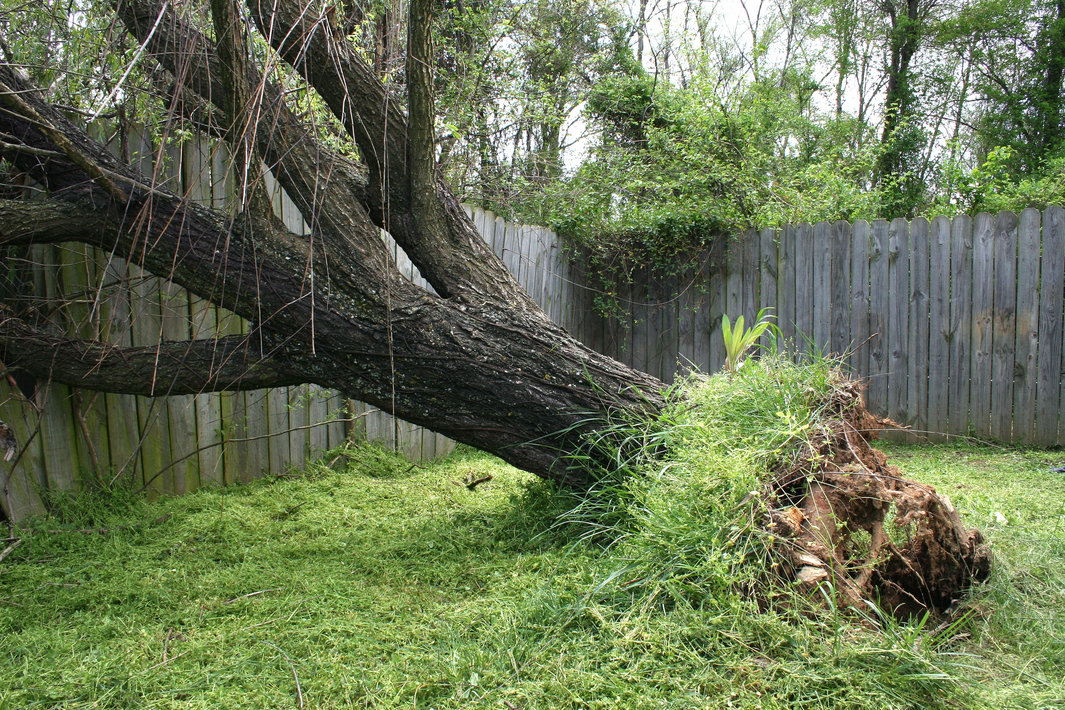Is It Possible To Replant An Uprooted Tree Tree Service