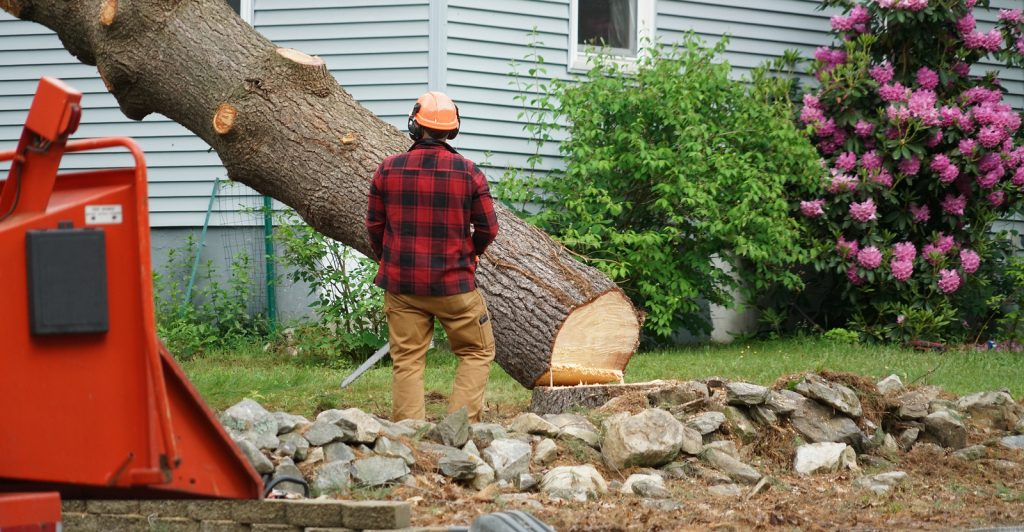 Fishers Tree and Stump Removal 317-537-9770