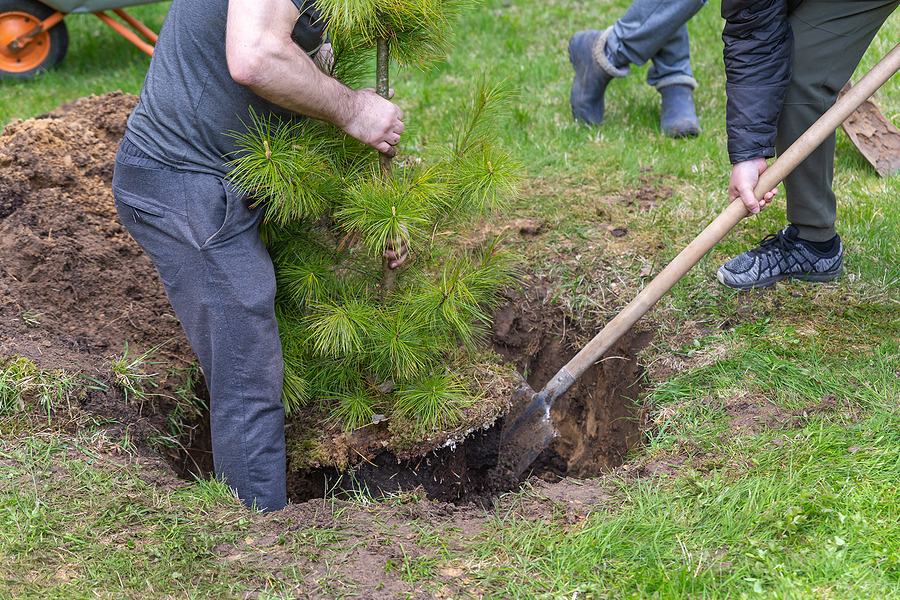 Fishers Indiana Tree Services