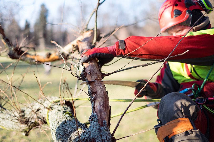 Fishers Indiana Residential Tree Service