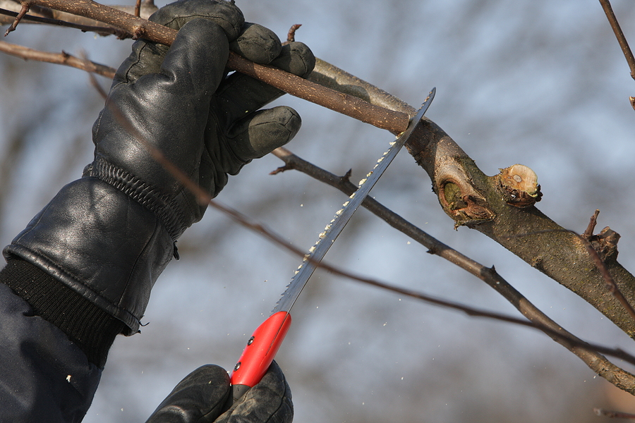 Fishers Indiana Tree Pruning 317-537-9770